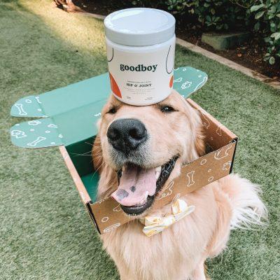 Nahrungsergänzungsmittel & Kräuter für Hunde